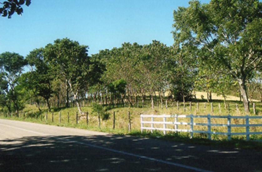 Rancho en Venta Balancán De Domínguez, Tabasco
