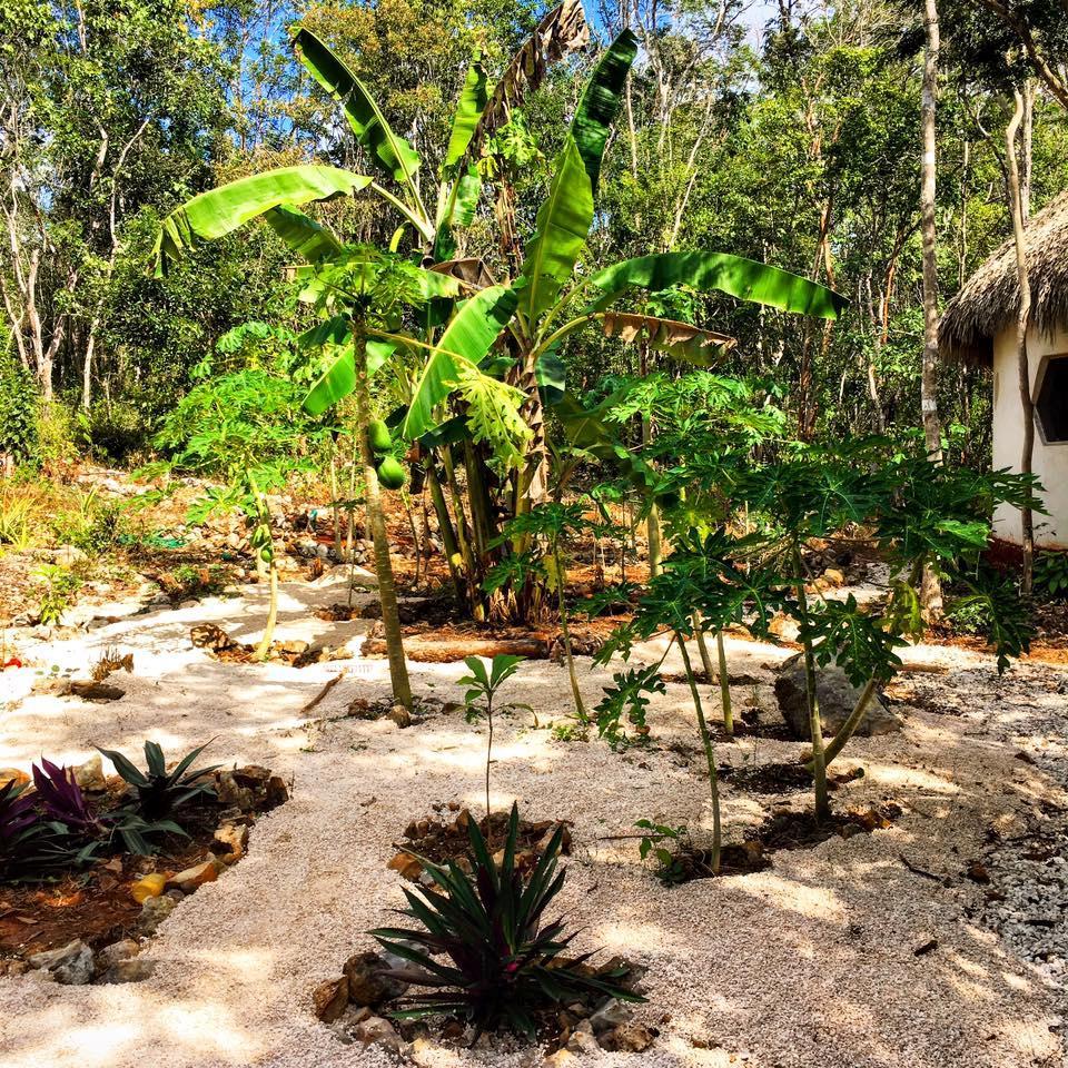 Villa en Venta Kilómetro 8, Carretera Libre Unión-yaxcaba, Yaxcabá, Yucatán